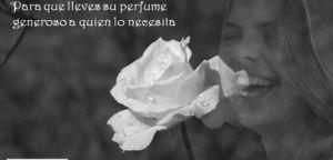 """""""Una rosa y tú"""". En memoria de Marta"""